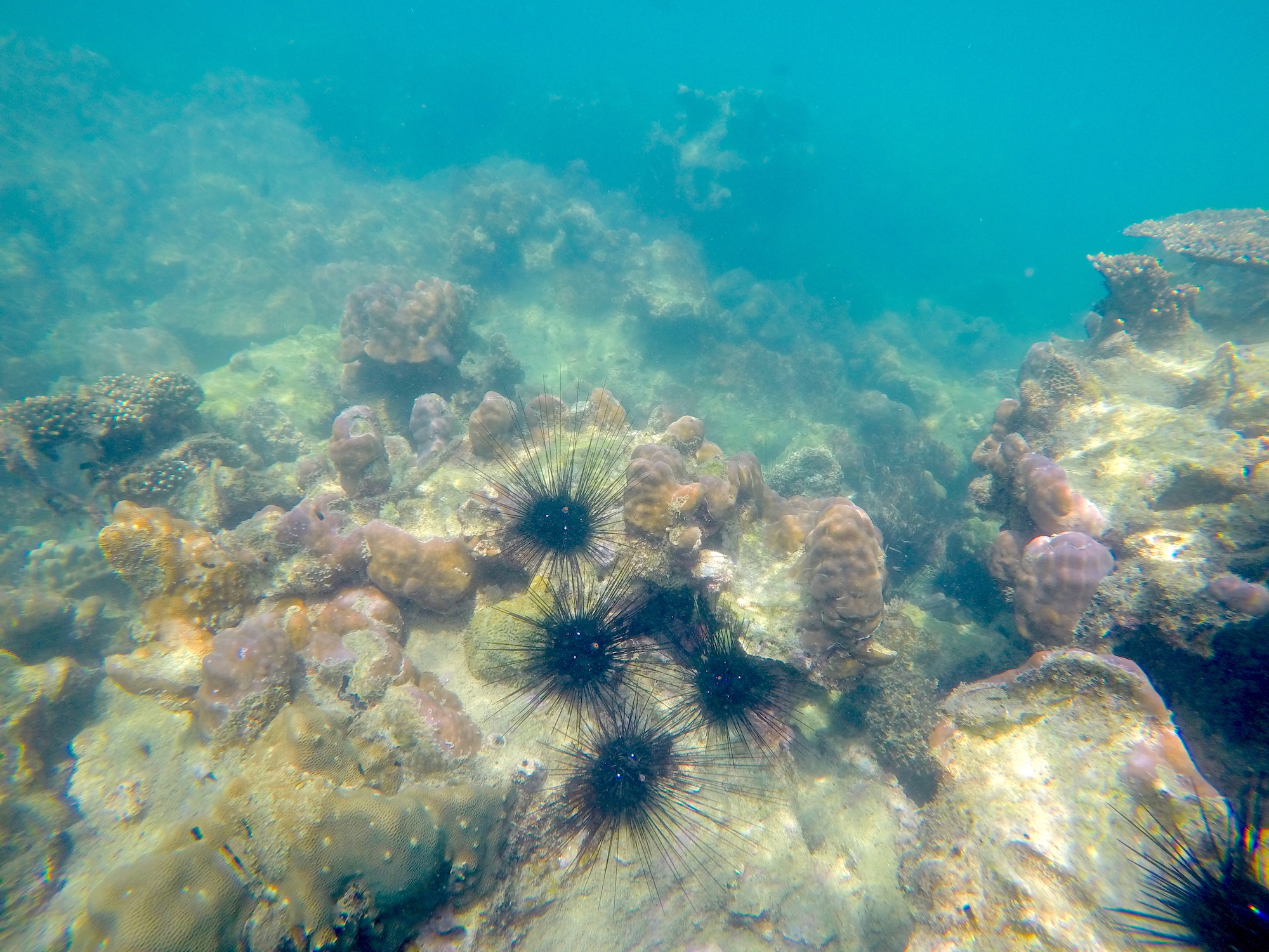 Video – Koh Samet, Thailand – Snorkeling