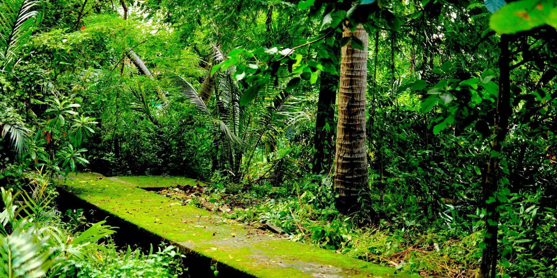 GREEN LUNG: BIKING THROUGH BANGKOK'S JUNGLE